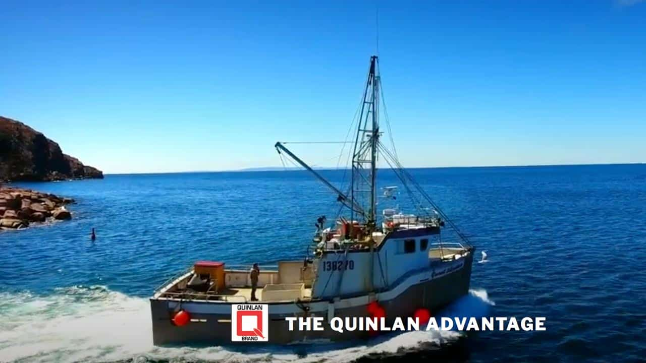 Quinlan Brothers into video